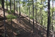 image 20111024-la-palma-parque-nacional-3-la-caldera-de-taburiente-jpg