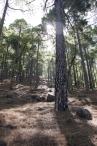 image 20111024-la-palma-parque-nacional-4-la-caldera-de-taburiente-jpg