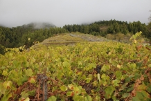 afbeelding 20111024-la-palma5-wijngaard-hoog-op-de-berg-jpg
