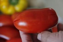 ..en in de onderkant van de tomaat.