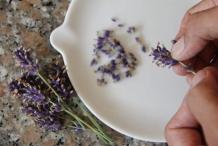 Pluk 12 bloemen van een lavendelplant