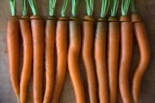 De gesneden wortels